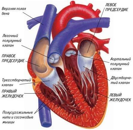 http://medicalru.ru/wp-content/uploads/2014/10/101414_2117_2.jpg
